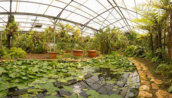 החממה הטרופית, הגן הבוטני של אוניברסיטת תל אביב. צילום: יורם רשף