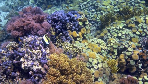 מחקר חדש חושף השפעות הרסניות של קרם הגנה נגד שמש על שוניות האלמוגים