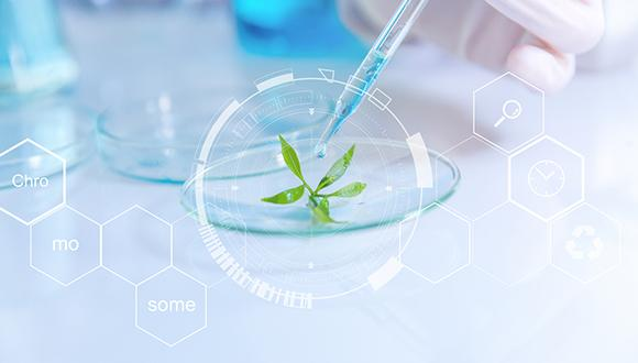 מהו החומר הצמחי שיילחם במחלות המטבוליות?
