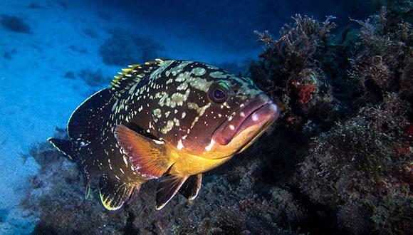 """""""אפקט השוליים"""" שפוגע בשמורות הימיות באוקיינוסים"""