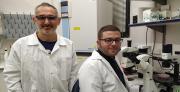 המולקולה שתחסל תאי גזע סרטניים